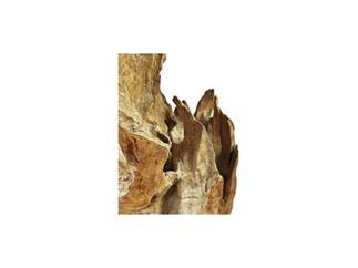 EUROPALMS Wurzelobjekt Teak natur 160cm