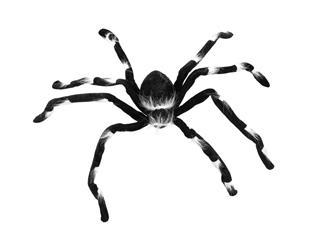 Europalms Halloween Spinne 70cm x 14cm x 5cm - Überdimensionale Spinne