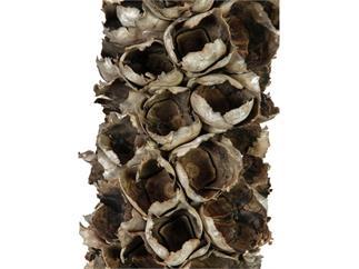 Europalms Cacho Coco ca. 120-190cm - Getrocknete Babassupalmen-Blüte