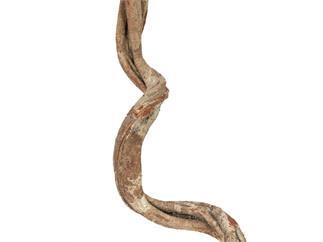 Europalms Cipo Rosca Liane, getrocknet 100x6cm - Getrocknete Liane