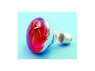 Reflektorlampe OMNILUX R80 230V/60W E-27 rot