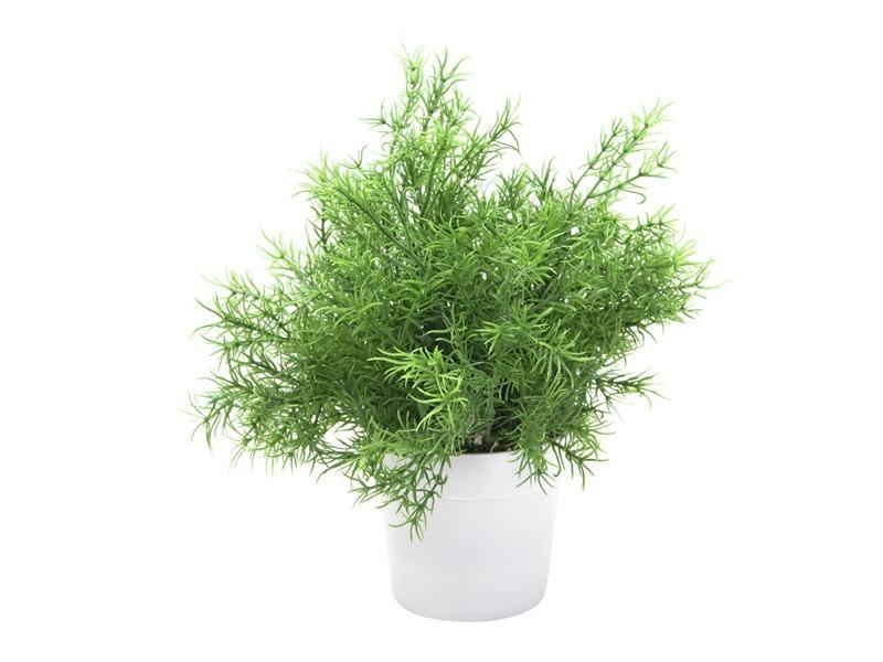 Europalms Asparagus, 24cm, Kunstpflanze