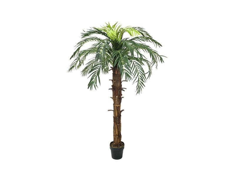 Europalms Kokos-Königspalme, 220cm, Kunstpflanze