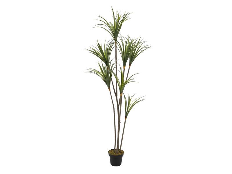 Europalms Yuccapalme mit Naturstämmen, 180cm - Kunstpflanze