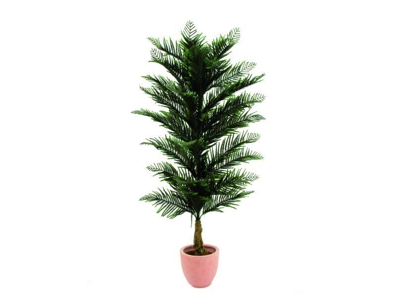 steinigke pinie nadelbaum im topf hhe 150cm preisvergleich special g nstig kaufen bei. Black Bedroom Furniture Sets. Home Design Ideas