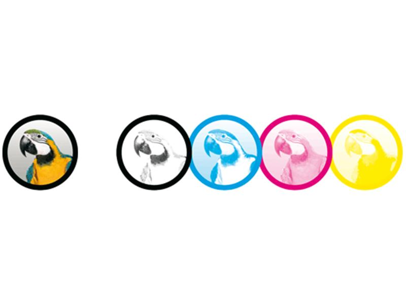 Glasgobo Multicolour     Duplikat
