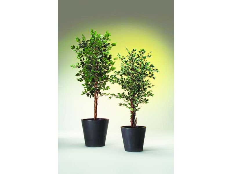ficus benjamini 1260 bl tter 210cm kunstpflanze. Black Bedroom Furniture Sets. Home Design Ideas