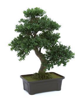 Europalms Buchsbonsai, 61 cm - Kunstpflanze