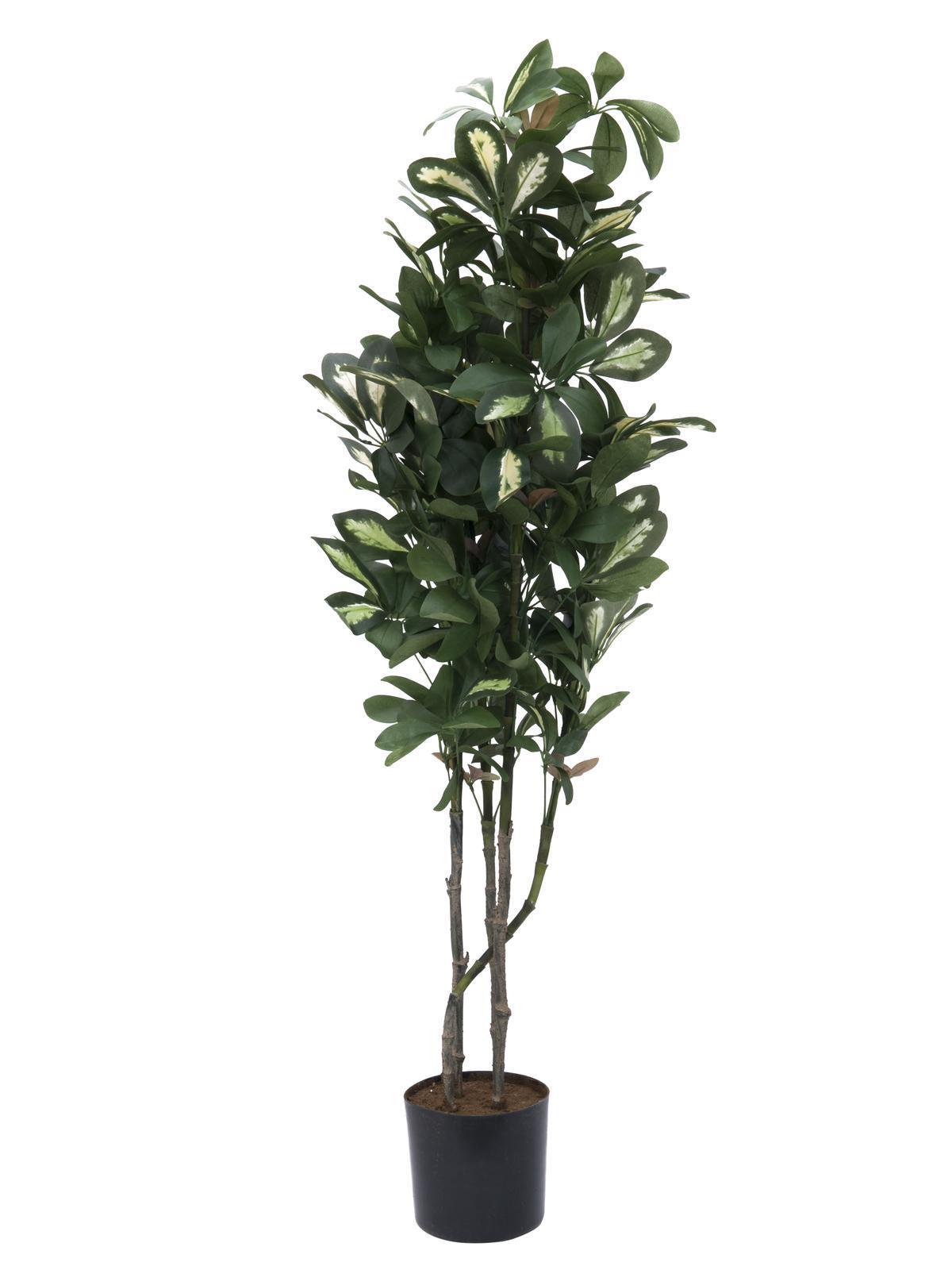 Europalms Schefflera, 90cm - Kunstpflanze