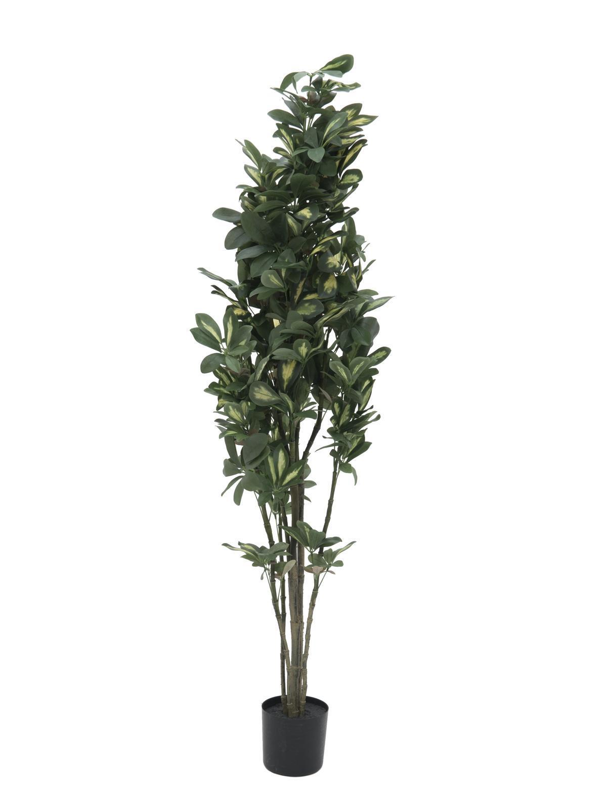Europalms Schefflera, 120cm - Kunstpflanze