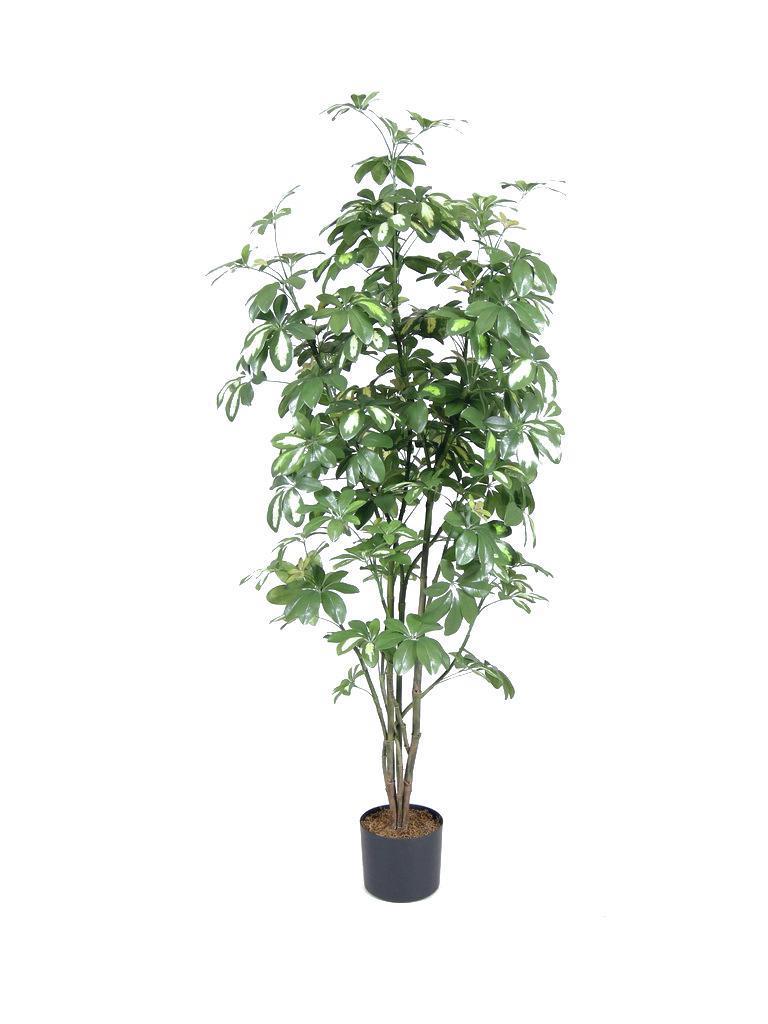 Europalms Schefflera, 150cm - Kunstpflanze