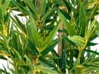 EUROPALMS Bambus deluxe, Kunstpflanze, 150cm
