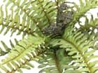 EUROPALMS Waldfarn, Kunstpflanze, 40cm