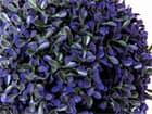 EUROPALMS Graskugel, künstlich,  violett, 22cm